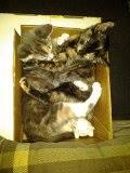 sharing a box