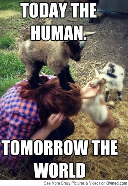 Today-The-Human-Tomorrow-The-World-Funny-Meme (431x624)