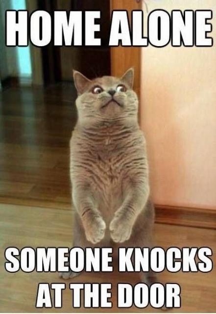 5e652b361572ee29696821a826df5d0a--cat-memes-funny-memes (441x640)