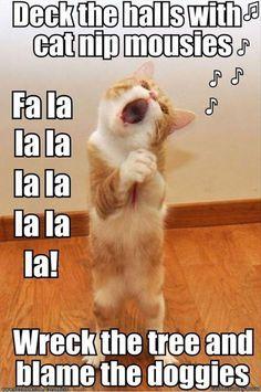0d0b57badacca5e9811b4886bcb09427--animal-memes-animal-funnies (236x355)