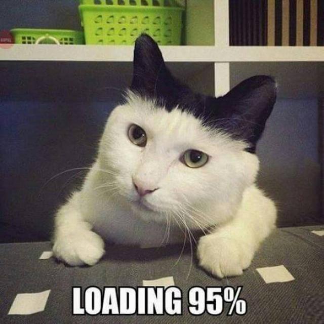 Loading-Cat (640x640)